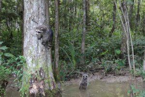 visita a los pantanos de nueva orleans