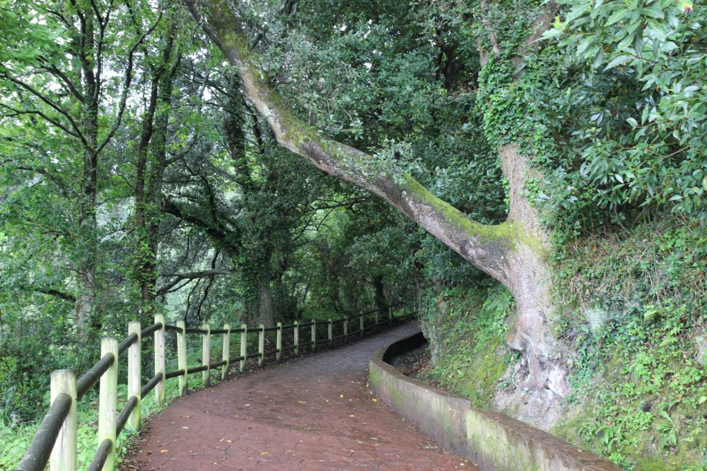 Camino a San Juan de Gaztelugatxe