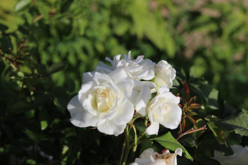 flores chenonceau 7