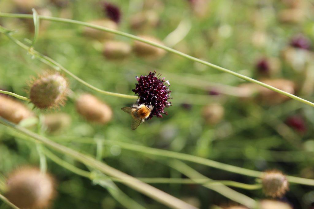 flor en chenonceau